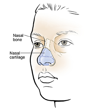 Three-quarter view of child's face showing nasal bones and cartilage